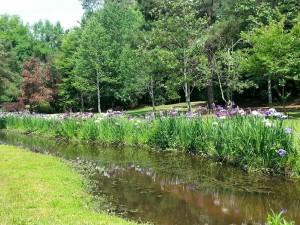 Spring at Swan Lake