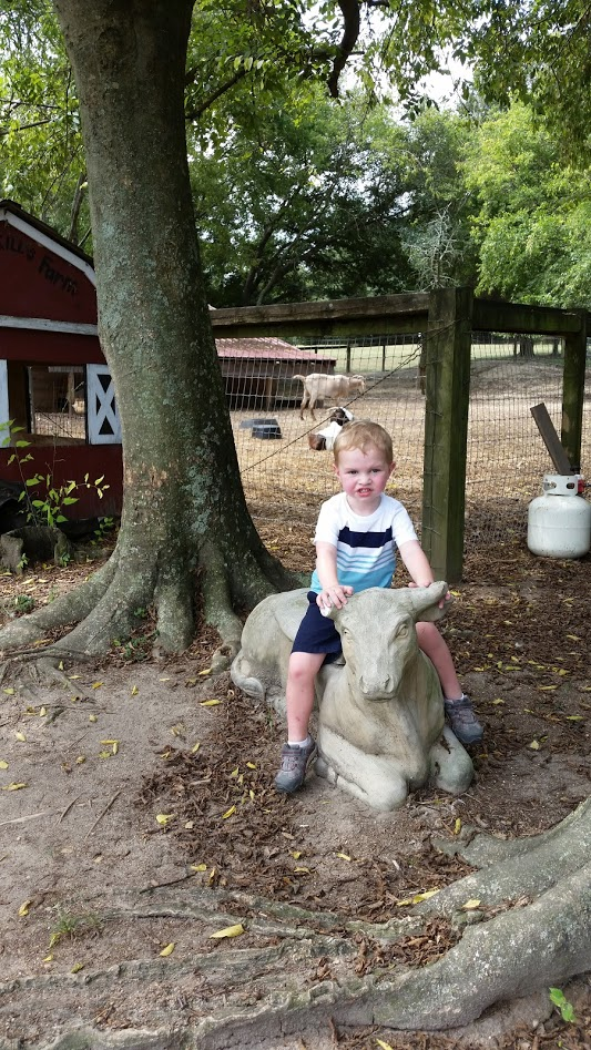 R on the cow