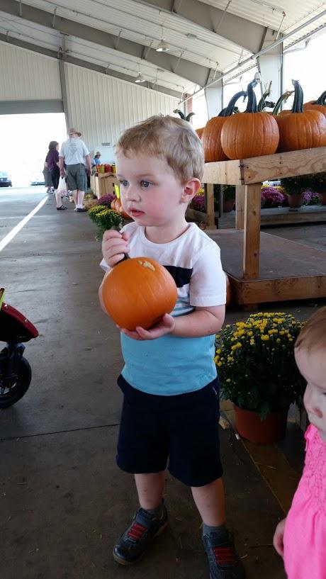 Reynolds Pumpkin