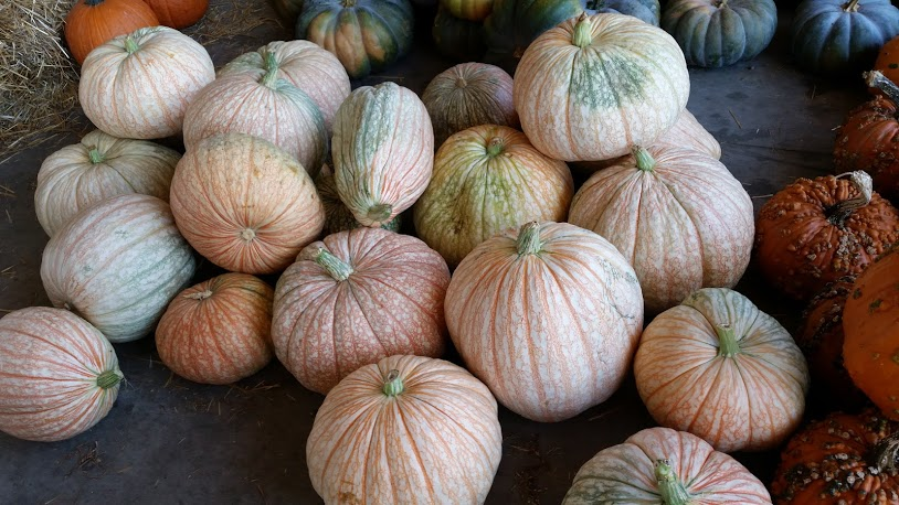 Vein pumpkins